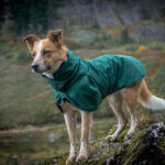 Sitka, a cattle dog wearing a green rain jacket from Voyagers K9 apparel