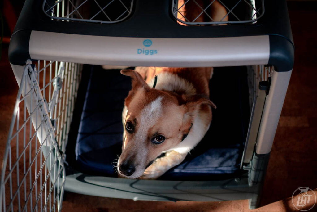 Sitka loves lying on his Snooz Pad, an orthopedic dog bed that fits perfectly inside the Revol crate.