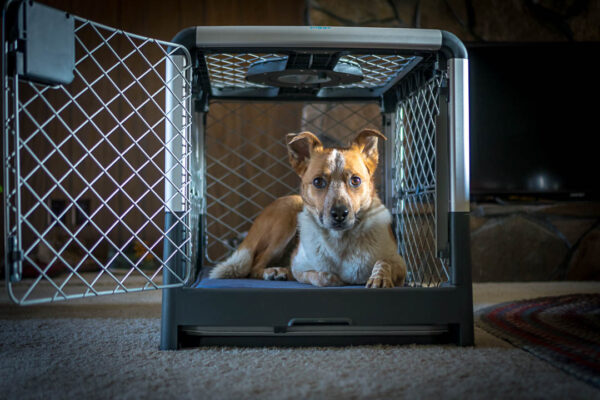 Sitka hanging out in the Diggs Revol Dog Crate