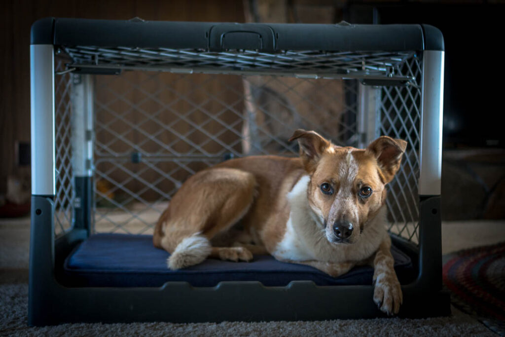 The Diggs Revol Dog Crate features a garage-door style opening that allows your dog to come and go as they please.
