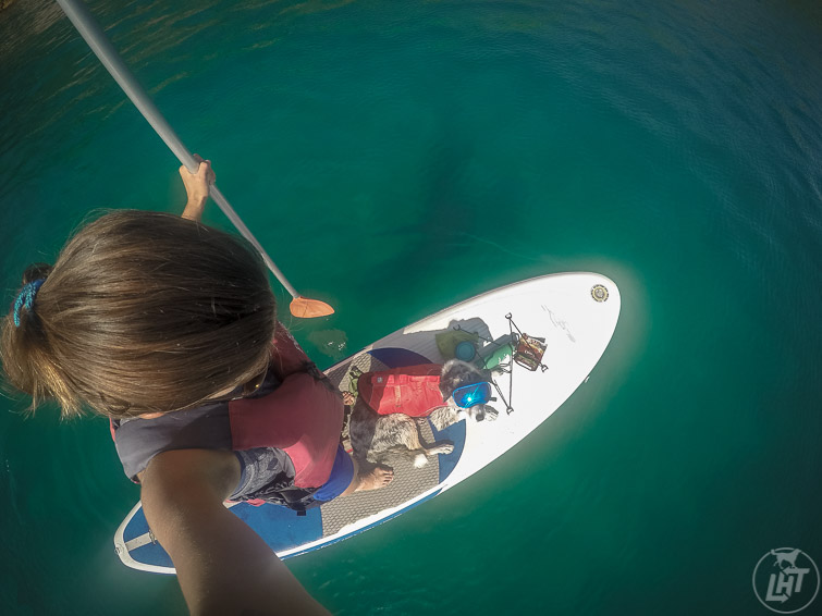 Paddle boarding is a great activity to do on a dog-friendly visit to the Florida Keys