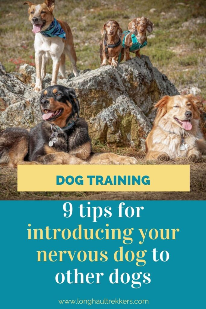 9 Tips for Introducing a Nervous Dog to Other Dogs and People Pinterest Image