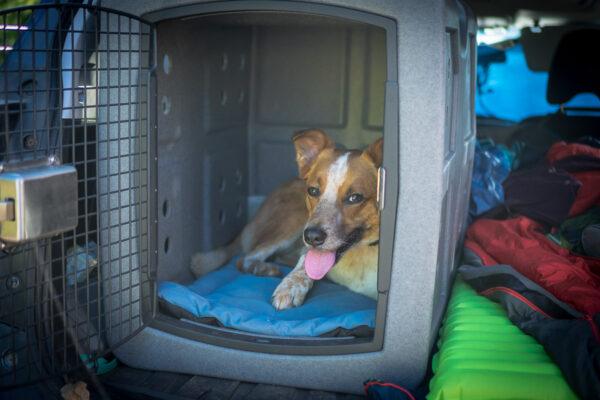 Dakota Dog Kennel for Car Travel