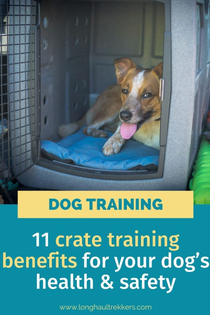 11 Crate Training Benefits for Your Dog's Health & Safety
