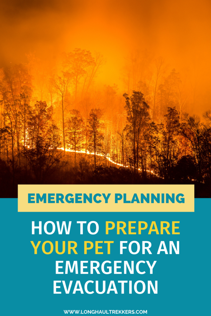 Emergency Preparedness: Creating a Disaster Plan for Your Pet