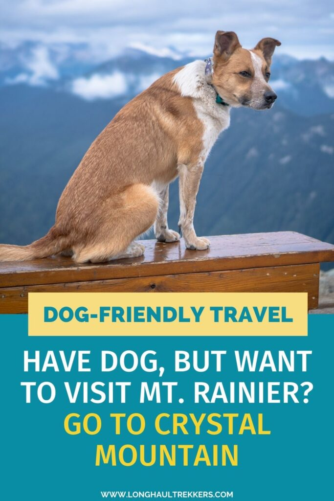 Have a Dog and want to Play Near Mt. Rainier? Check out Crystal Mountain Resort