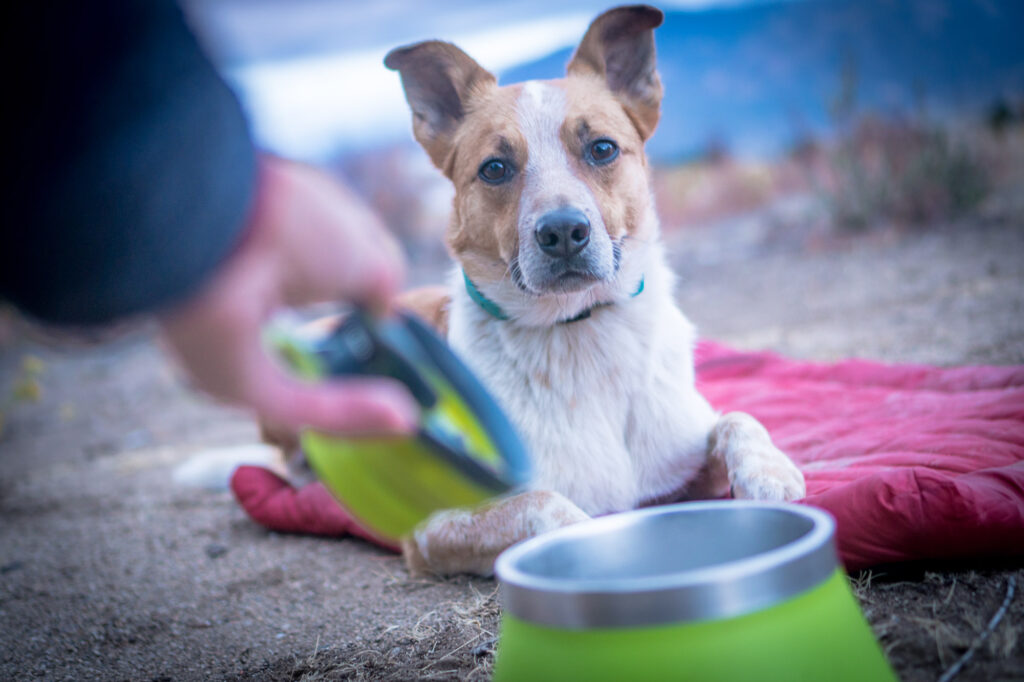 Measuring out your food with a measuring cup, like this one from Dexas, along with exercise, can help prevent an overweight dog.