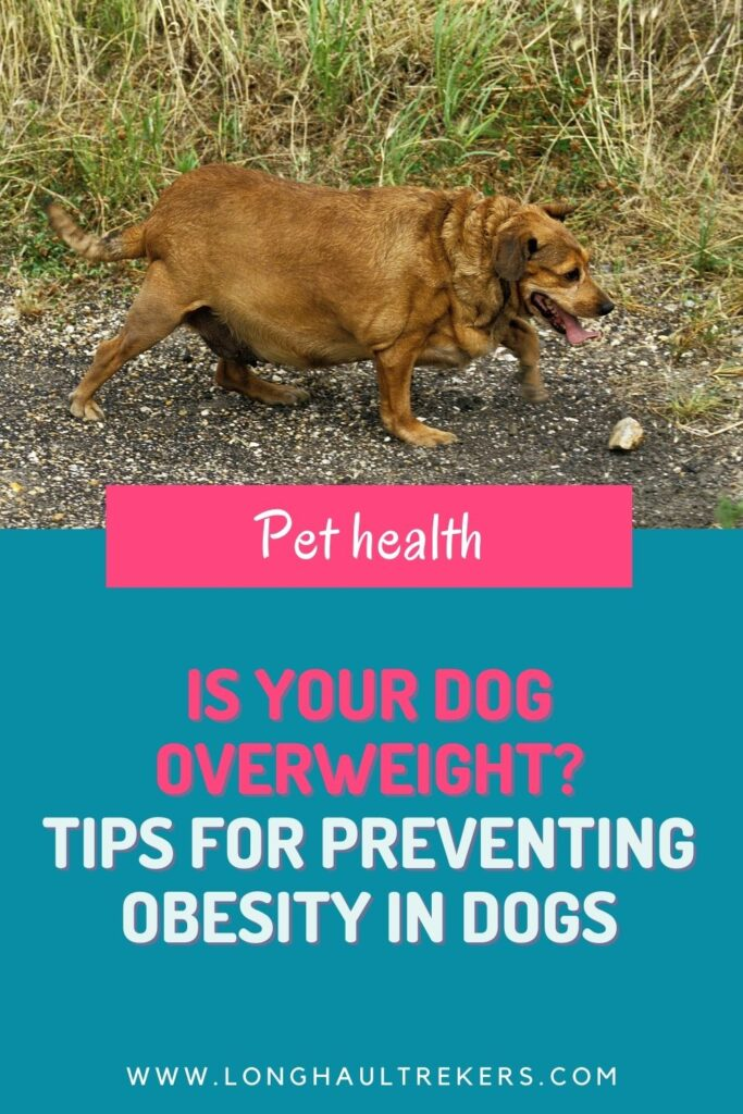 Is Your Dog Overweight Pinterest Image